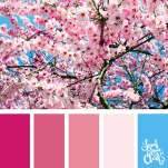 Color-palette-211-pink-flowers